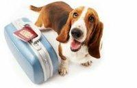 Как получить ветеринарный паспорт на домашнего питомца?